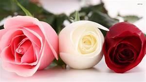 White Wallpaper with Pink Roses - WallpaperSafari