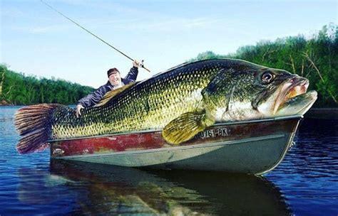 Bid Fish Big Bass Big Fish Small Fish Big