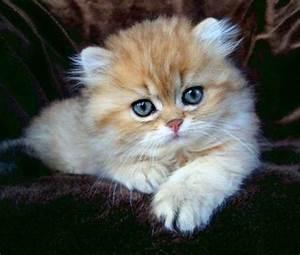 Welche Katzenrasse Passt Zu Mir : welche katze passt zu mir ~ Lizthompson.info Haus und Dekorationen