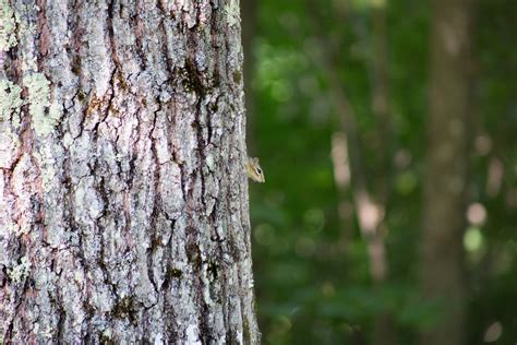 grey squirrel   tree  daytime  stock photo