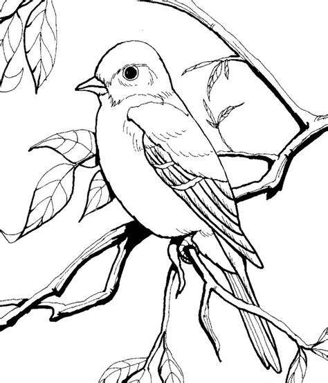 Texas Mockingbird Coloring Pages