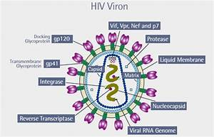 Venn Diagram Of Hiv And Aids