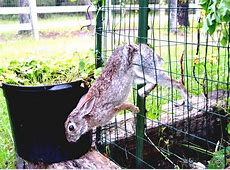 How To Keep Rabbits Out Of Garden How To Create Vegetable