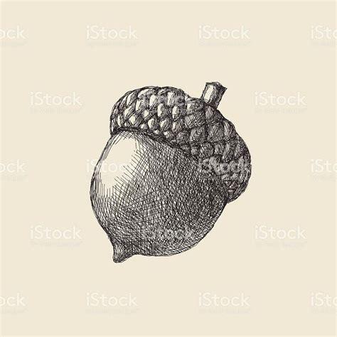 acorn tattoo ideas  pinterest