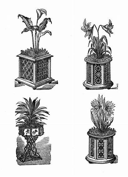 Potted Plant Plants Digital Gardening Indoor Stamps