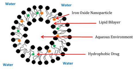 iron oxide nanoparticles  pancreatic cancer therapy medcrave