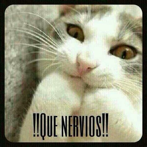 Gato Meme - que nervios meme risa gato cosas graciosas pinterest memes humor and funny spanish