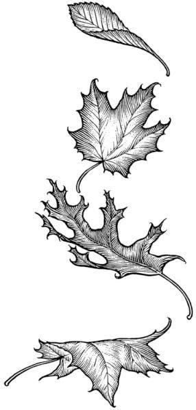 leaves sketchingdrawingslove