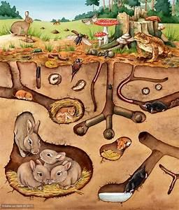 Tiere Unter Der Erde : illustratoren organisation e v v ~ Frokenaadalensverden.com Haus und Dekorationen