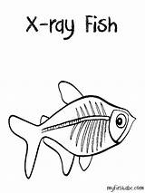Ray Coloring Pages Fish Clipart Tetra Drawing Xenops Rays Preschool Animals Template Things Sketchite Colouring Collection Draw Popular Getdrawings Sheets sketch template