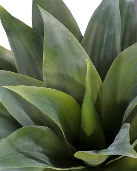 agave succulent plant lifelike broad leaf agave artificial succulent plant at officescapesdirect