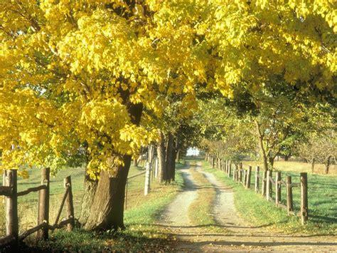 hd  wallpaper autumn desktop wallpaper