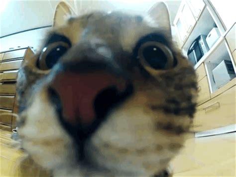 le canapé gif sur yvette regard petit photos de chats