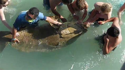 naples pier caught grouper