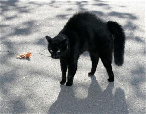 cat behavior problems facts cat urine marking cat