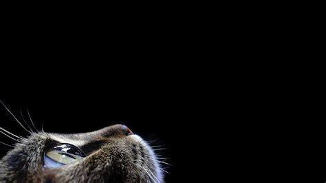 Black Cat Wallpaper For Android Wallpapersafari