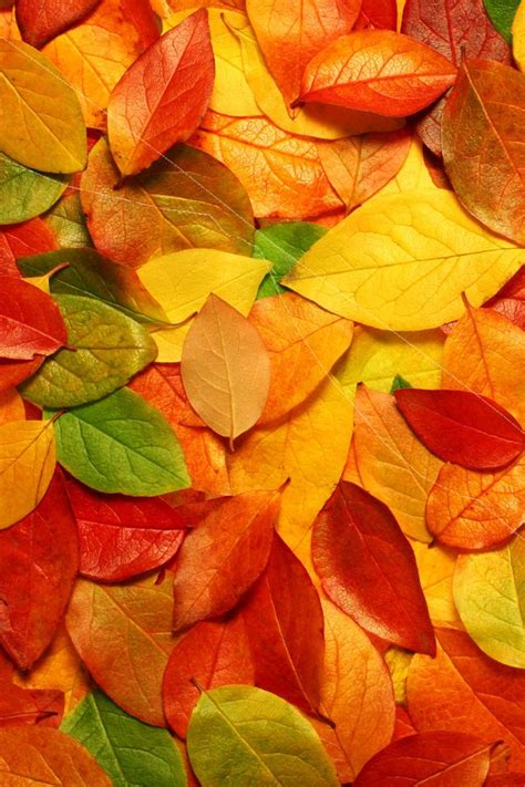 Beautiful Fall Leaves Iphone Wallpaper by Iphone Wallpaper Images Fall Wallpaper In