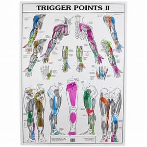 Reflexology Charts For Sale Trigger Points Chart Trigger Point Therapy Trigger