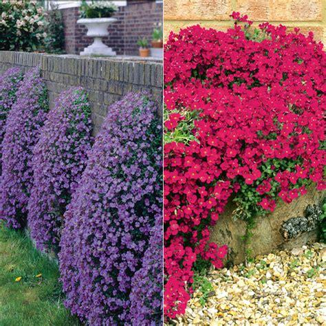 evergreen flowering shrubs for sun flowering ground cover plants full sun as beautiful world flowers