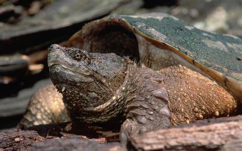 acheter une tortue domestique pour bien commencer