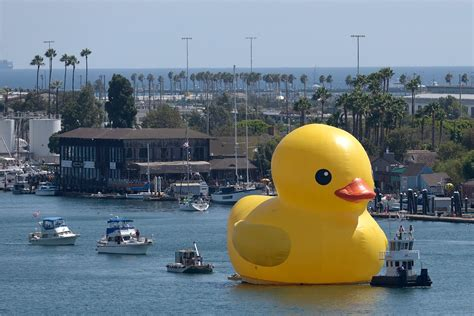 Giant Rubber Duck In Los Angeles Time