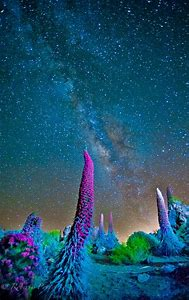 Milky Way Over National Parks