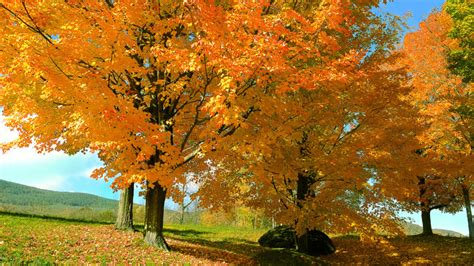 42 Places To See Fall Foliage In New England