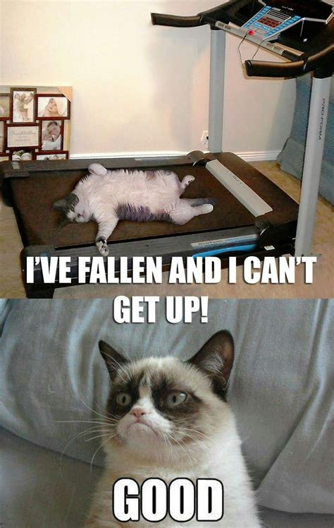 693 Best Images About Grumpy Cat On Pinterest Discover