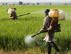 What is the Difference Between Pesticide and Herbicide   Pesticides And Herbicides