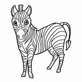 Zebra Coloring Cartoon Cute Vector Baby Drawing Pages Clip Illustrations Illustration Vectors Getdrawings sketch template