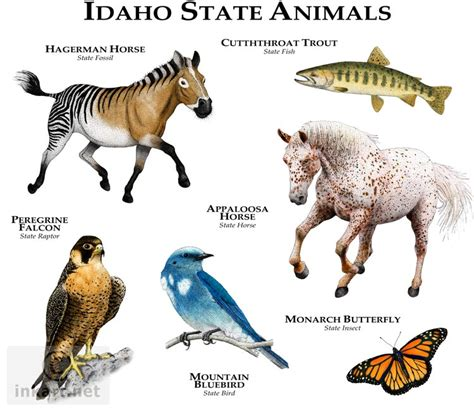 State Animals Of Idaho Line Art And Full Color Illustrations