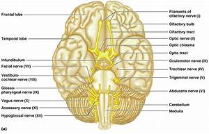 Toosogie Medical Images  Cranial Nerves   X