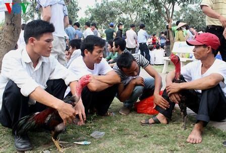 Hobi sabung ayam online | twuko. Gambar sabung ayam saigon vietnam di acara festival ~ Ayam ...