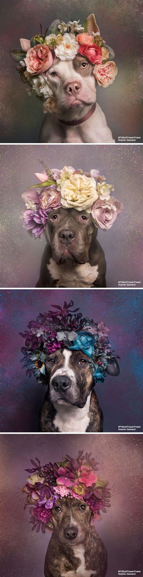 Dogs with flower crowns tumblr izmirmasajfo