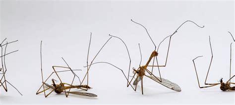 Stechmücken Im Zimmer by Mittel Gegen Schnaken M Cken Im Zimmer So Vertreiben Sie