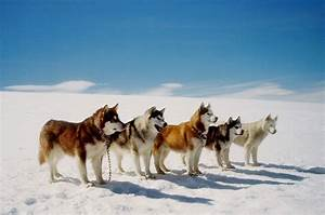 Eight below (8 below 0; Antarctica) - Frank Marshall, Paul ...
