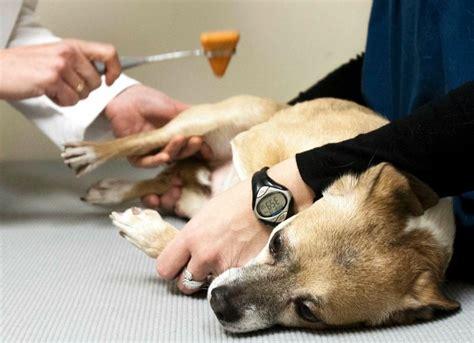 sintomi neuromuscolari clinica veterinaria