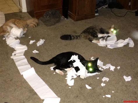toilet paper joey friends weird ears meet crook cute cats hq free pictures of