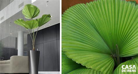 20 Plantas que Vivem Dentro de Casa • Casa de Irene