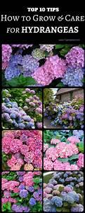 The 25  Best Garden Shrubs Ideas On Pinterest