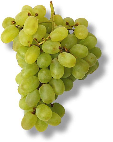 le grappe de raisin vend b 233 b 233 pour 4 euros et une grappe de raisins