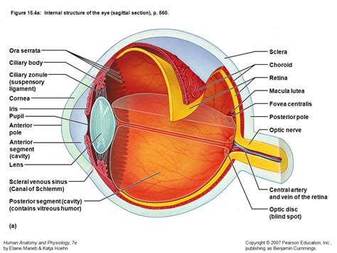 Internal Eye Diagram  Anatomy Organ. Paris Hotels Near Opera House. Bankofamerica Online Signin Next Step Rehab. Motorcycle Insurance Qoutes All Doctor Jobs. Consolidation Loans Rates Mysql Database Host. Financial Modeling Examples Bankruptcy In Ny. Compare Dish And Directv Channels. Forming An Llc In Maryland Evc Financial Aid. Secret Window Secret Garden Plumbers Reno Nv