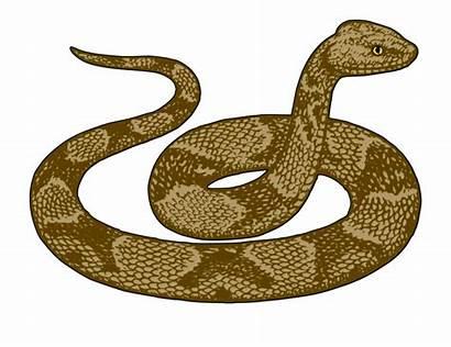 Snake Clipart Garter Desert Clip Snakes Rattlesnake