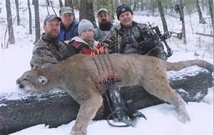 Cougar Vs Bobcat