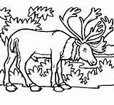 Elk Coloring Coloringcrew Animals sketch template