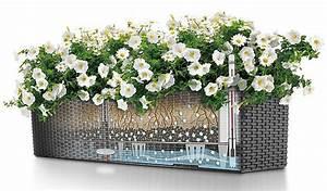 Blumenkästen Mit Bewässerung : blumenk sten mit wasserspeicher weniger gie arbeit ~ Lizthompson.info Haus und Dekorationen