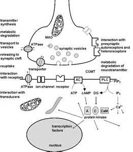 Psychopharmacology  Depression Isocarboxazid