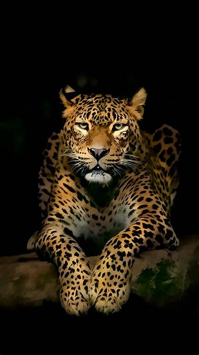Wallpapers Android Mobile 4k Iphone Leopard Ultra