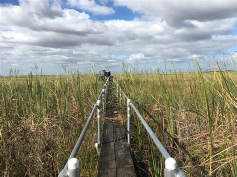Airboat Sw Tour by Airboat Everglades Miami