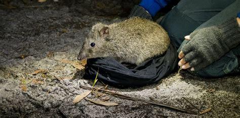 Cats wreak havoc on native wildlife but we've found one